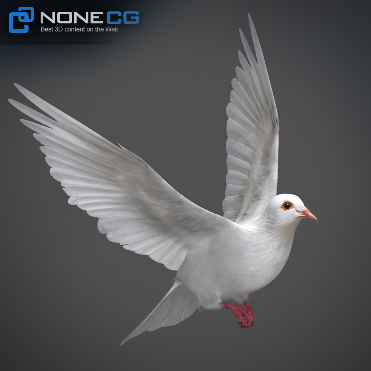 3D Animated White Dove » Download And Buy 3D Profestionnal